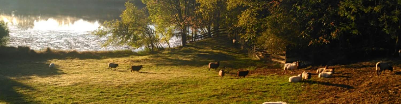 Sweet Tree Hill Farm